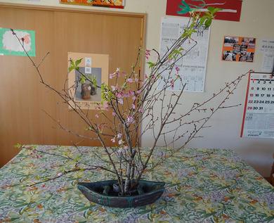真ん中に桜の鉢.jpg