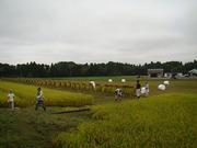 稲刈り小.jpg