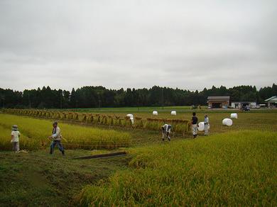稲刈り①.jpg